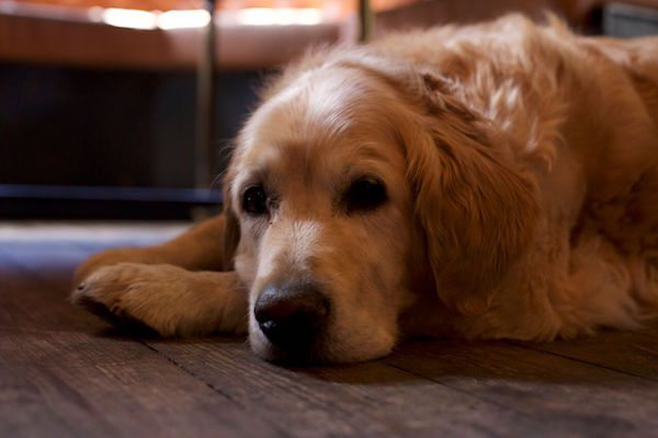 Dog Friendly Pubs, Cafés & Restaurants - Brighton & Sussex