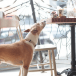 Coggings and Co, Dog Friendly, Brighton, Seven Dials Restaurant
