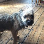 Dog Friendly pubs, Brighton, food pubs, where to take the dog
