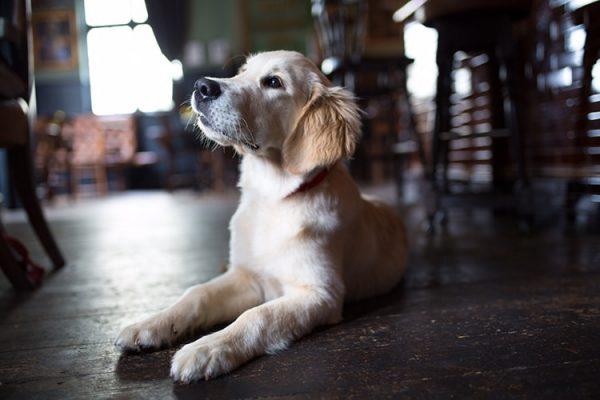Dog Friendly Pubs, Restaurants, Cafés