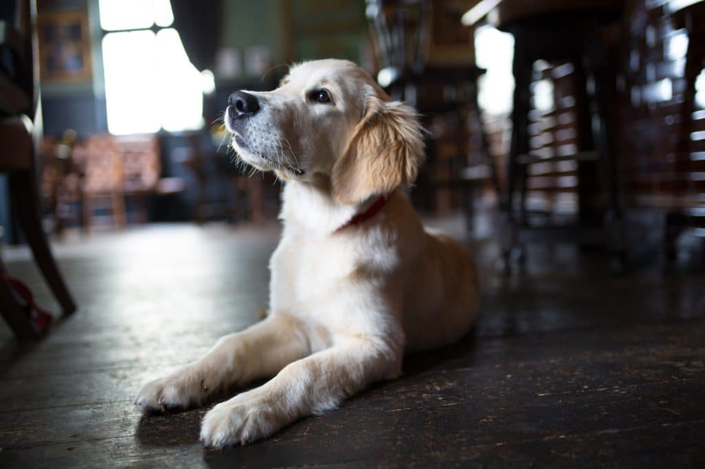 Charlie the pub dog - Dog Friendly Pubs Brighton