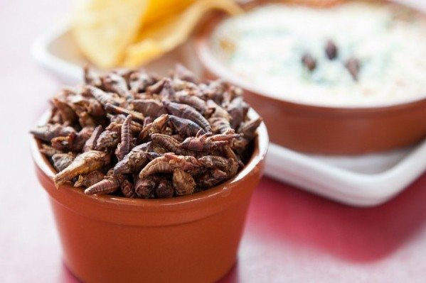 food trends, wahaca, insects