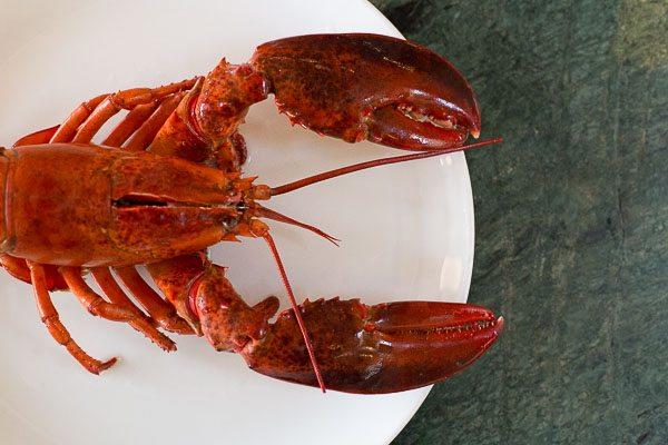 Lobster Restaurants, Brighton