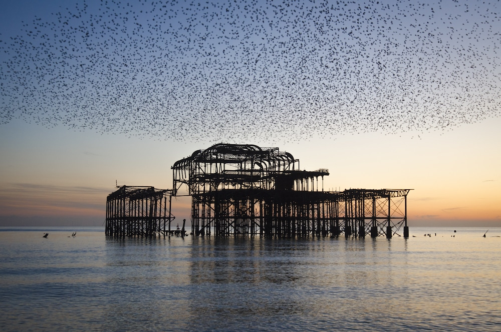 The starlings West Pier, Jo Hunt photography, Brighton