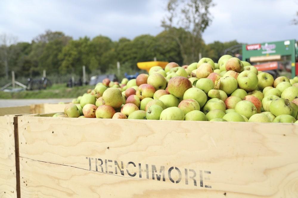 Apples at Trenchmore Farm Horsham