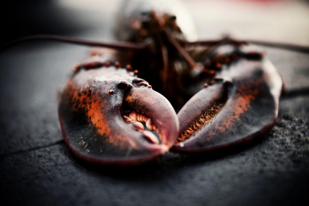 Lobster at The Salt Room