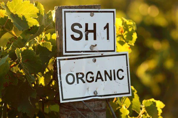 Wine, organic, vineyard