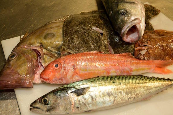 Fish - Brighton & Newhaven Fish Sales, Brighton, Shoreham Harbour