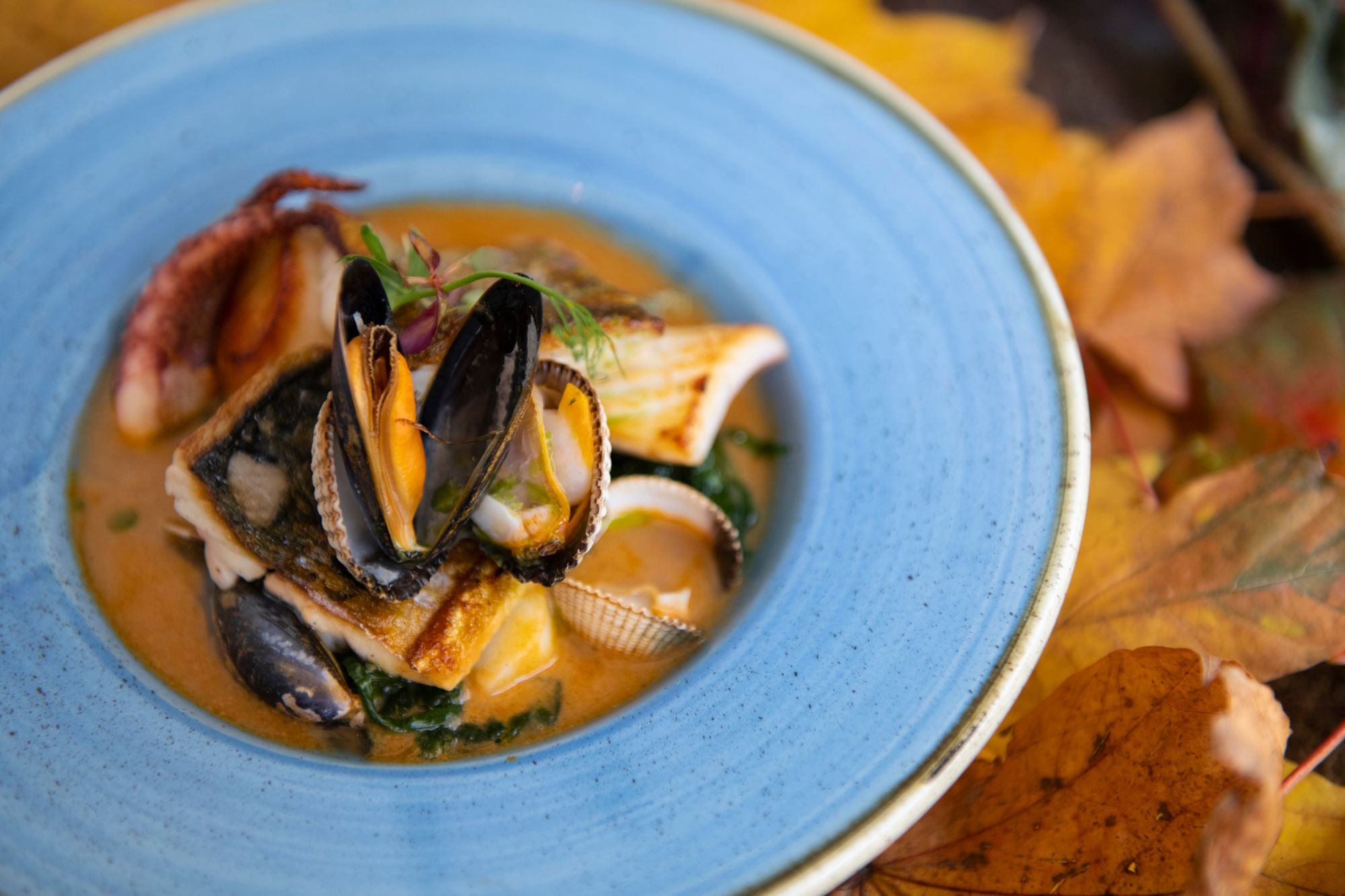 mussels soup served in blue plate with leaf background, autumn vibes