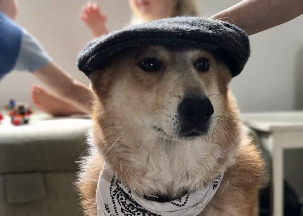 Floyd The Dog - Dog Friendly Brighton