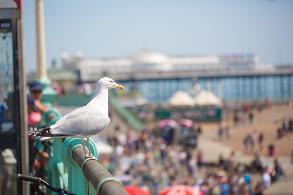 Seagull - Brighton Beach