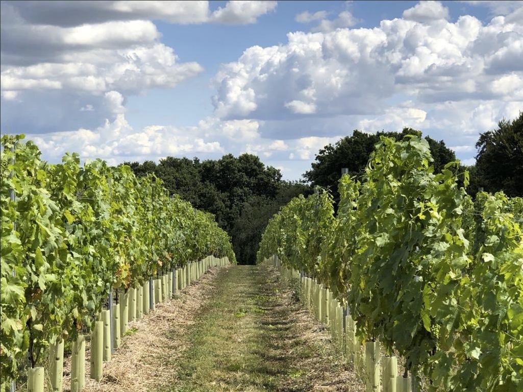 Vineyard and path