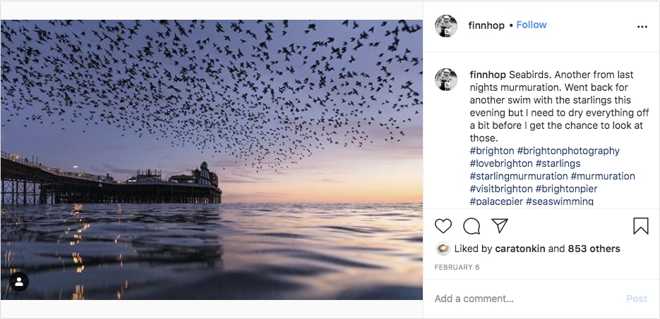 murmurations over the pier