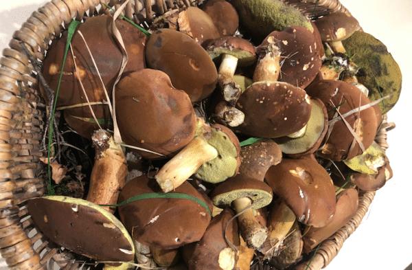Foraged Mushroom