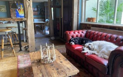 Two dogs laying side by side on a red leather sofa in front of a low wooden table, in the background there is a traditional English country pub
