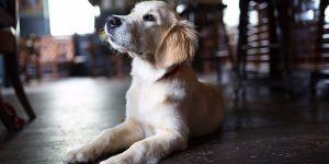 The Better Half, food pub, Dog Friendly Pubs & Restaurants