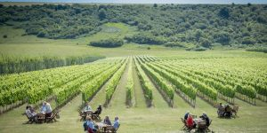 A view of a vineyard on a sunny day with people having a picnic on tables