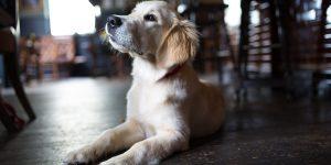Charlie the pub dog