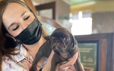 A woman in a mask is holding up a puppy